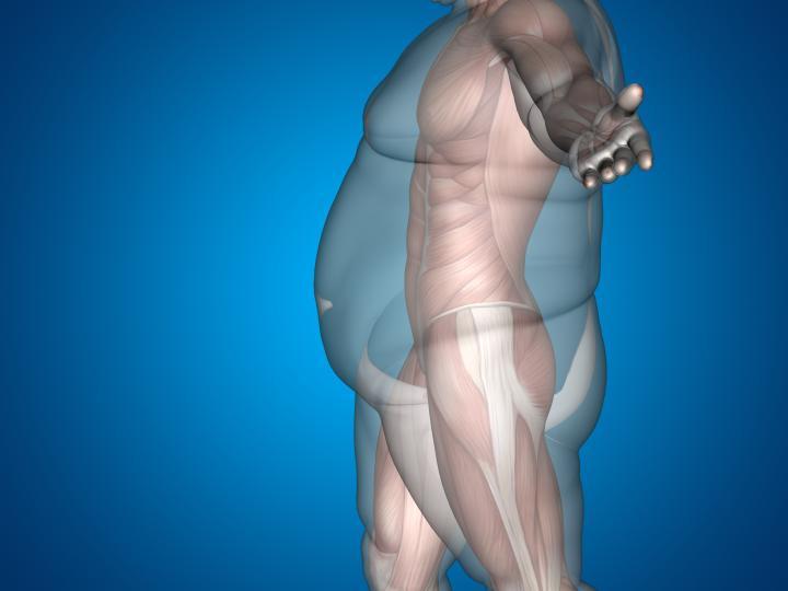 Uma das principais causas de ginecomastia.