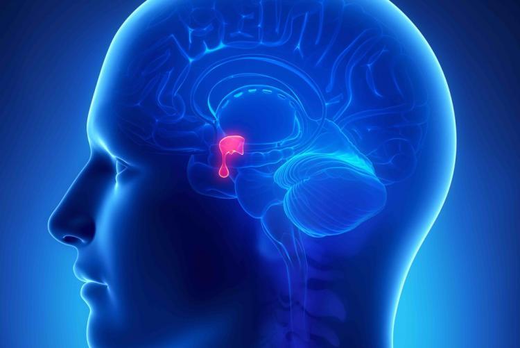 Alterações na hipófise podem causar ginecomastia